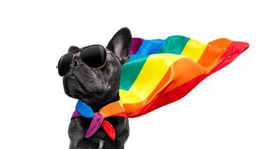 Pride hund med flagg